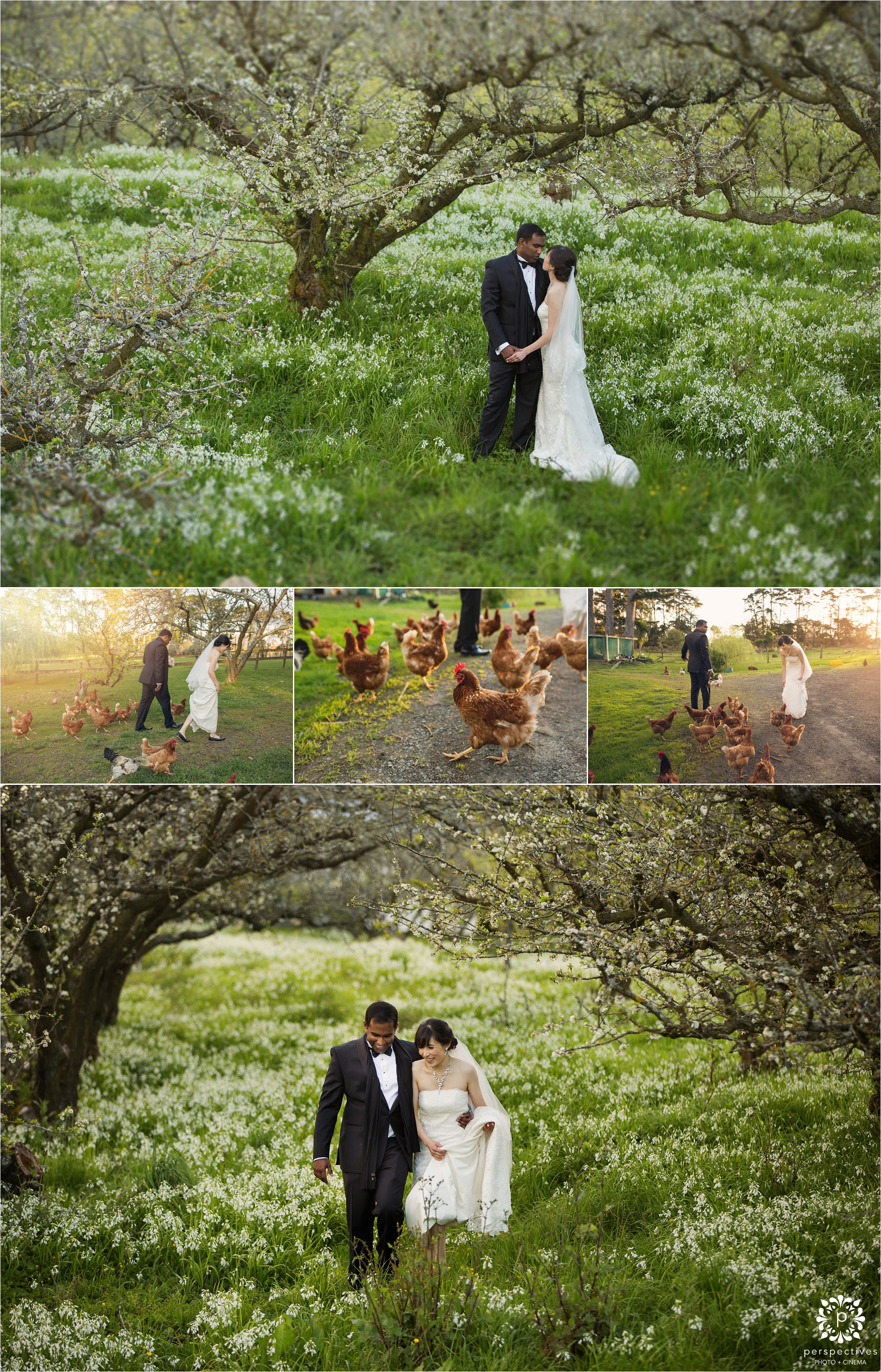 Auckland cherry blossom wedding location